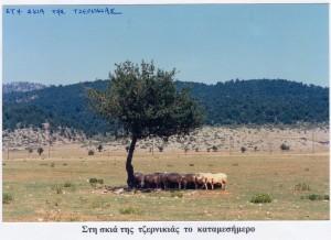 vasiadis138